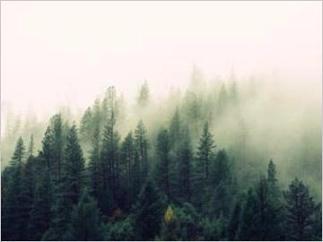 中国林业生态产权交易所网站建设